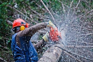 R.a.m. Export d.o.o., Podiranje dreves