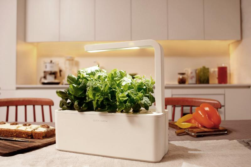 Zeliščni vrt v kuhinji