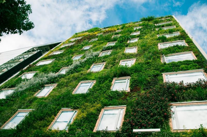 Zelene stene, zelena fasada