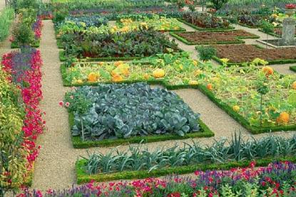 Oblikovanje zelenjavnega vrta