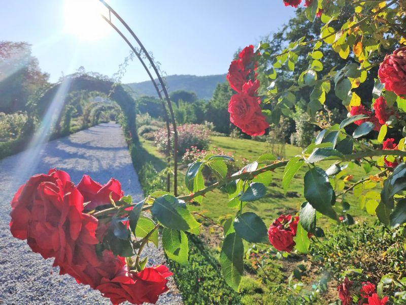 Botanični vrt Univerze v Mariboru - čudoviti svet rastlin