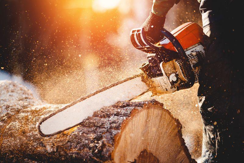Podiranje dreves, odstranjevanje panjev in mulčenje