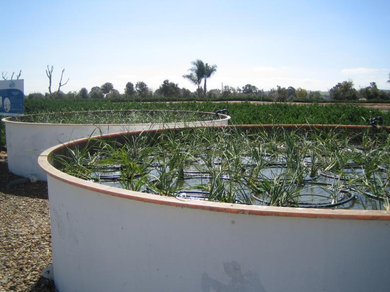 Rastlinska čistilna naprava